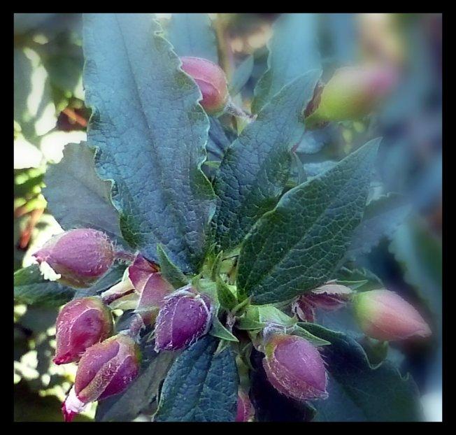flower_buds