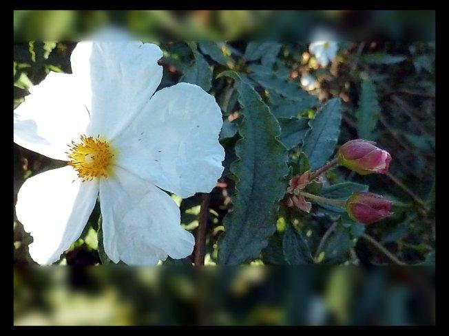 flower&buds