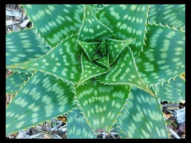 green_plant
